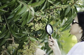 botanist-studies-tree