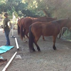 horses-back