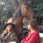 What Happens When You Make a Herd of Highly Sensitive Horses and People?
